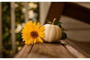 Our Top Seven Artificial Flowers That Are Perfect For This Autumn