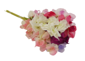 Sweetpea Spray Assorted x 12 Stems
