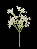 Gypsophila x 6 White