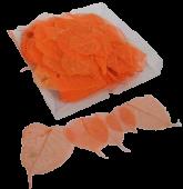 Skeleton Leaves Bleeched Orange X 200