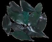 Magnolia Leaf Pres Green 1kg