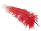 Ostrich Feathers Red X 5