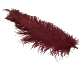 Ostrich Feathers Burgandy X 5