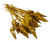 Cane Cone Bundle Yellow