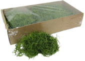 Tillancia Moss (Forest Moss) Bag Apple Green 200g