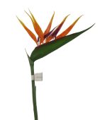 Strelitzia (Bird Of Paradise) Orange 90cm