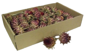 Artichokes Big X 30 Boxed