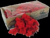 Reindeer Moss (Icelandic Moss) Red