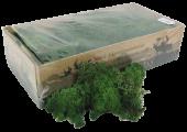 Reindeer Moss (Icelandic Moss) Moss Green