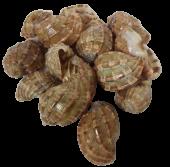 Shells - Sarpa Nest Shells X 15 Pcs