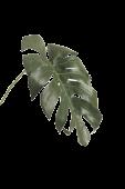 Monstera Leaf Small 70cm
