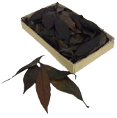 Black Leaves 150pcs