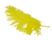 Ostrich Feathers Yellow x 5