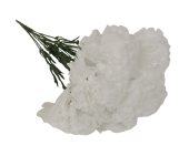 Bloom Carnations White x 12 Stems