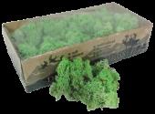 Reindeer Moss (Icelandic Moss) Mint Green