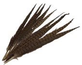 Pheasent Feathers 45 - 50cm x 10