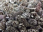 Birch Pine Cone Frosted x 1/2 Kg