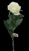 Rose Simone White 73cm