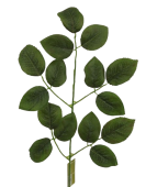 58cm Rose Leaf Spray Green