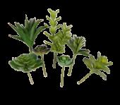 12cm Succulent Assortment x 7