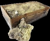 Reindeer Moss (Icelandic Moss) Misty White