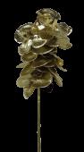 Metallica Phalaenopsis 71cm