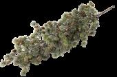 Larix Tree White Wash 85cm
