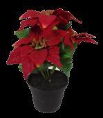 Poinsettia x 3 Heads Red 18cm In Pot