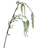 Amaranthus Spray 110cm White