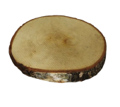 Wood Slice Birch 18-22cm 3cm Thick