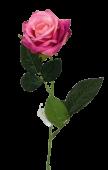 Diamond Rose Fuschia 40cm