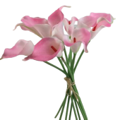 Real Touch Calla Lily Bundle x 10 Pink