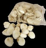 Shell White Chippi Small 1kg