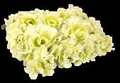 Rose Hydrangea Flower Wall Square 25x25cm Cream