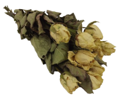 Dried Roses Ivory Avalanche Bunch