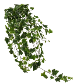 Ivy Hanging Bush 100cm Green/White