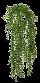 Ficus Pumila Hanging Bush UV 80cm