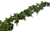 180cm Outdoor Ivy Garland WR Green/Variegated