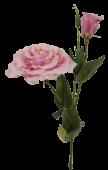 80cm Eustoma Spray Pink