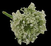28cm Gypsophila Bundle Cream