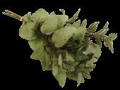 40Cm Mint Bundle X 3 Green