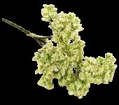 36cm Lace Flower Cream