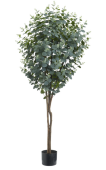 6' Eucalyptus Tree