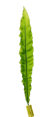 86cm Asplenium Leaf Green
