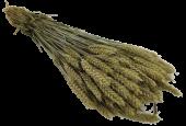 Dried Wheat Bunch (English)