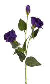 Lisianthus Spray 72cm Purple