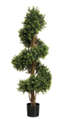 5' Boxwood Spiral Plant W/2,412 Leaves
