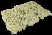 40 x 60cm Blossom Flower Wall
