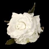 24cm White Open Rose Posy