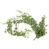 Large Ivy Busy Green 182cm
